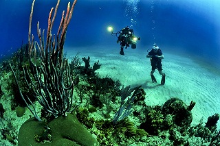 Maldives Things to do scuba diving