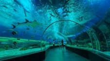Manila Places to Visit Ocean Park
