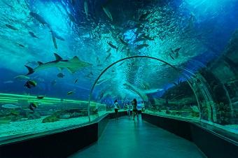 Manila Places to Visit Ocean Park