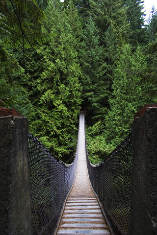 Vancouver Things To Do Lynn Canyon Park